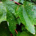 Rain Rain Go Away….