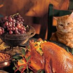 5 Tips on How to Get Along With your Family During Thanksgiving