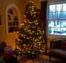 xmas-tree-blog