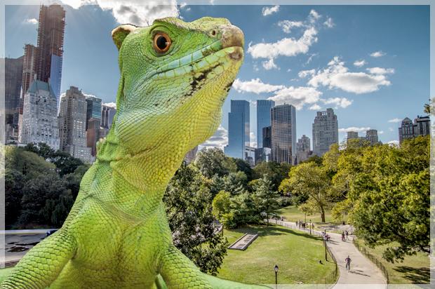 lizard_nyc_selfie